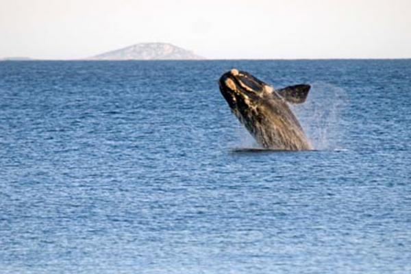 whale-waratah-bayCCBE8223-2360-C95D-DEB8-1A4AD7724ABB.jpg